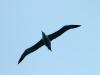 Royal Albatross Colony