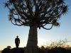 Bernhard mit Quiver Tree
