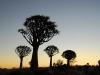 mehr Quiver Trees