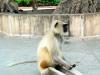 Affe vor dem Eingang